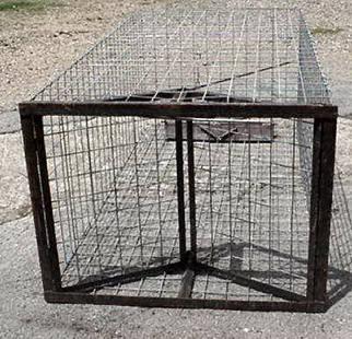 Hog Trap Door This hog trap is designed